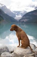 dog by mountain lake