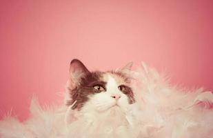 gato malhado glamouroso, se escondendo em penas