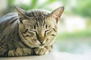 gato con ojos verdes foto