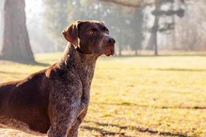 perro cazador foto