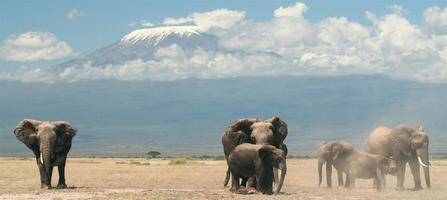 Elephants and the mountain