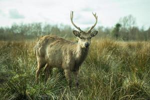 Beautiful deer in autumn nature