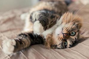 gato acostado en la cama foto