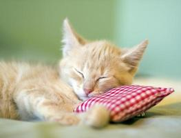 A baby cat taking a nap supported by a little pillow