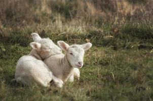 Snuggle buddies photo