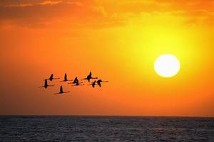 flamencos volando al atardecer bajo un sol brillante foto