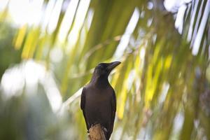 cuervo esperando
