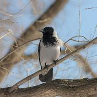 portrait of crow photo