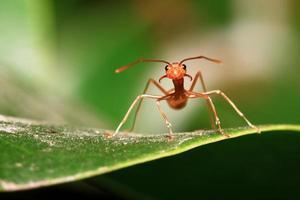 hormigas símbolo de la unidad foto