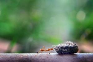 Ant tiny world (macro, entorno de enfoque selectivo en el fondo de la hoja)