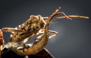 insetto photo