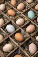 huevos foto