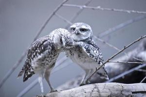 Bird couple photo