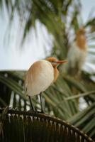 Baby Heron photo