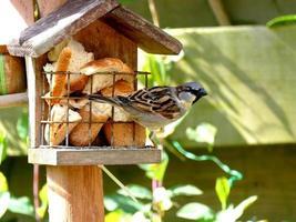 Sparrow feeding on birdhouse