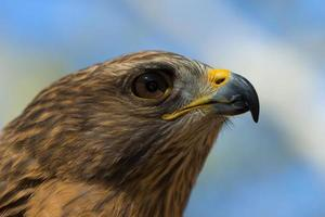 Hawk Eye photo