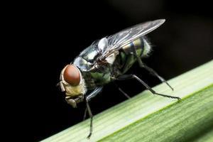 las moscas causan enfermedades foto