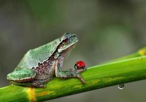 Treefrog photo