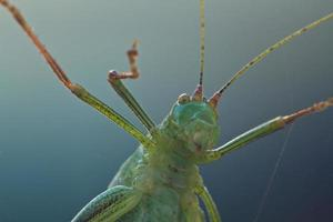 grasshopper in front of the lens photo