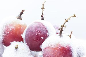 uvas rojas congeladas, hielo blanco en escamas, foto