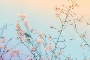 Cherry blossoms with a white-eye bird photo