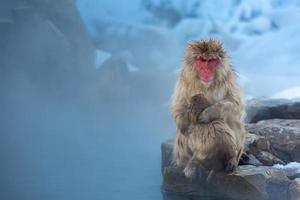 mono de nieve macaco onsen