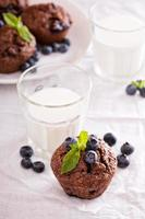 Chocolate muffins with blueberries