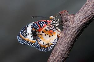 colorido de mariposa foto