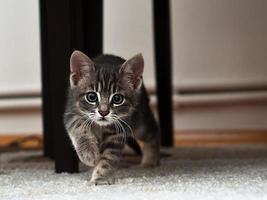 gatito foto
