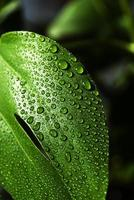 waterdruppel op blad