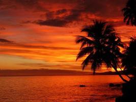 puesta de sol palmera foto
