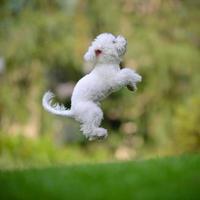 perro saltando - xxlarge foto