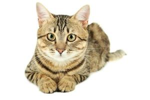 Beautiful cat on white background photo