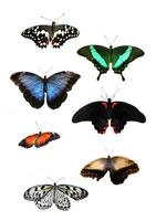 lindas borboletas tropicais