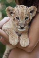Girl holding little lion cub in her arms