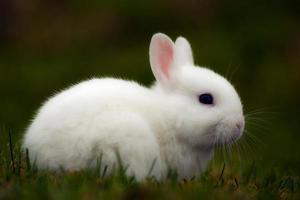 conejito blanco en hierba foto