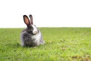 pequeño conejo en verde. foto