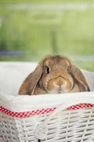 conejo de Pascua foto