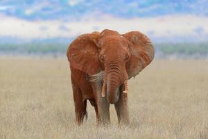 Elefante en el parque nacional de Kenia foto