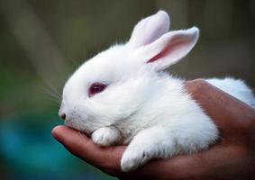 conejo blanco foto