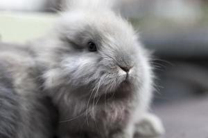 pequeño conejo foto