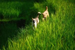 chien heureux qui traverse un pré flou