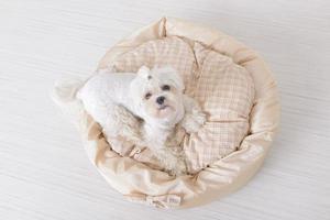 Dog on the dog bed photo