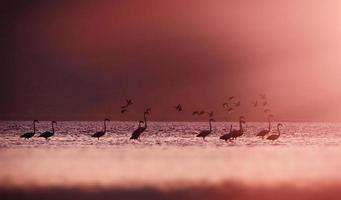 Flamingoes in Sun light.