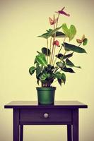 flamingo lily on a table with a retro effect