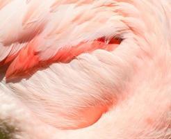 penas de flamingo