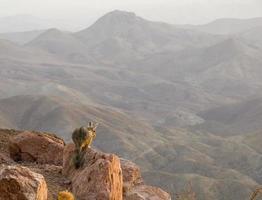 vizcacha et les contreforts andins