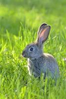 Young rabbit on field