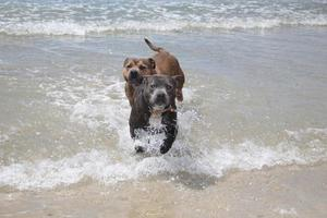 Dogs photo