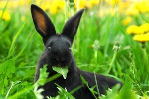 conejo negro en hierba verde foto